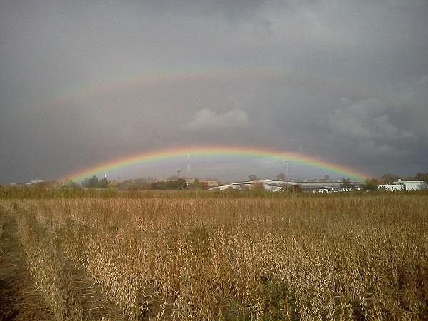 soybean rainbow
